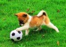 Jogos de Futebol com Animais